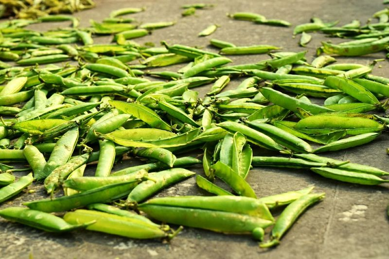 Close-up of green pea pods