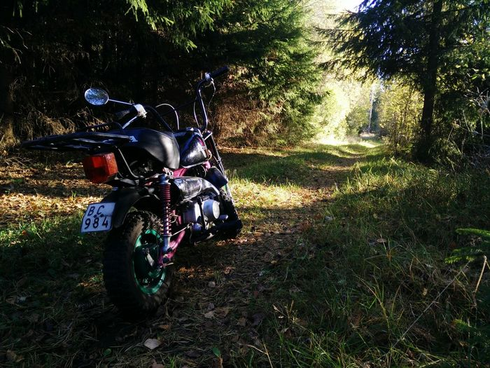 Driving in the woods with good ol' buddy Honda Monkey Motorcycle Offroad