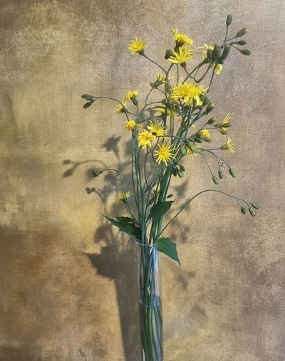 Close-up of yellow flowering plant in vase against wall