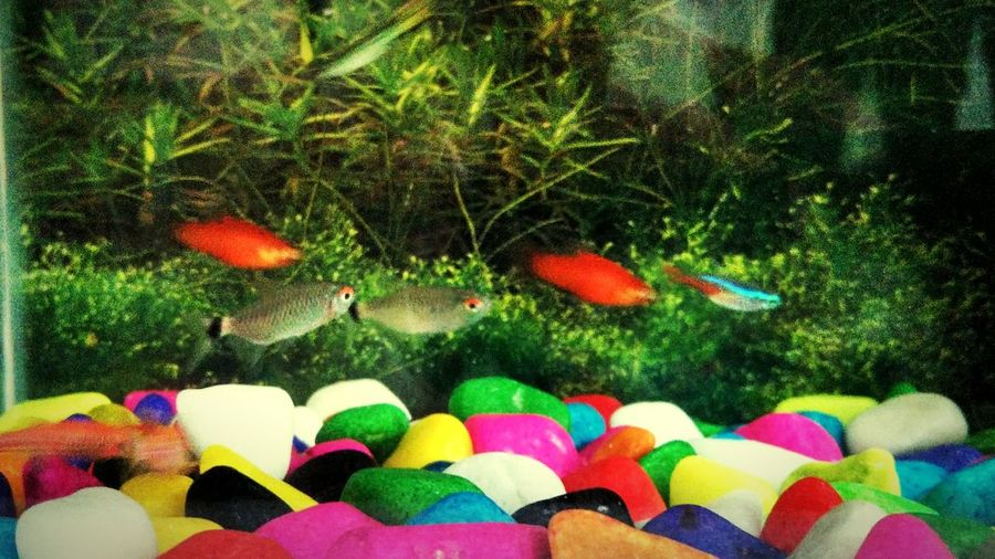 In memory of my platies!!! Fish Tank Colors Of Nature
