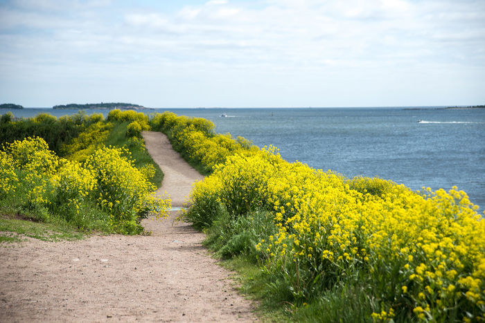 Beauty In Nature Day Flower Green Horizon Over Water Idyllic Landscape Nature No People Scenics Sea Sky Summer Sunny Suomenlinna The Essence Of Summer The Way Forward Tranquil Scene Tranquility Water Yellow