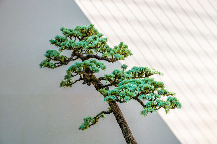 Close-up of tree by potted plant against wall