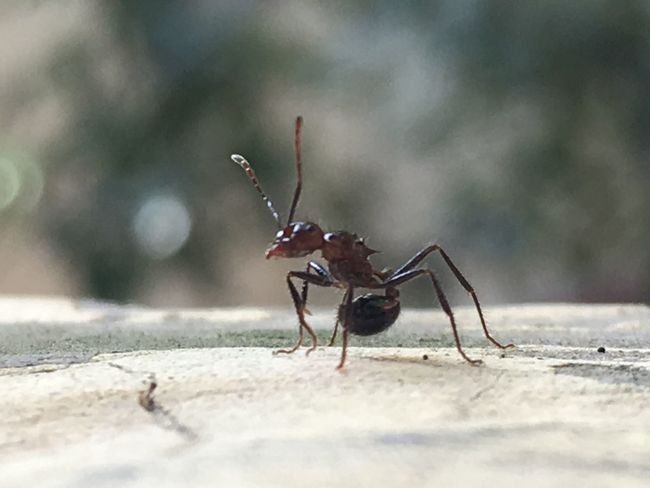 Animal Themes Animal Wildlife Animals In The Wild Ant Close-up Day Insect Insects  Nature No People One Animal Outdoors Selective Focus