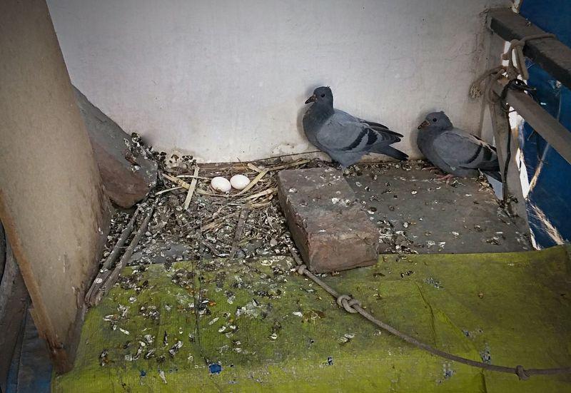 Pigeonslife Bird Photography