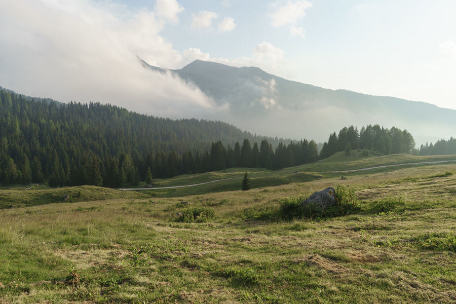 Beauty In Nature Cloud Countryside Day Grass Grassy Green Color Growth Hill Italia Landscape Mountain Mountain Range Nature No People Non Urban Scene Outdoors Passo Rolle Remote San Martino Di Castrozza Scenics Sky Tranquility Tree Trentino Alto Adige