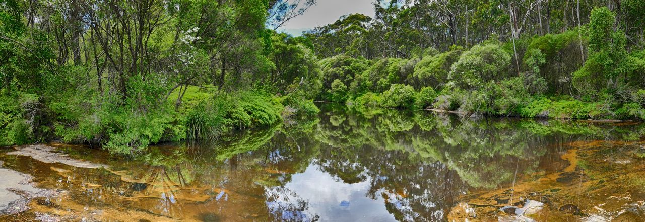 Upstream from Carrington Falls, New South Wales, Australia Australia Australian Bush Australian Landscape Beauty In Nature Forest Green Green Color Greenery Landscape Nature Outdoors Panaroma Reflection River Serenity Tranquility Water New South Wales  Waterway EyeEmNewHere. EyeEmNewHere The Great Outdoors - 2017 EyeEm Awards Breathing Space Perspectives On Nature