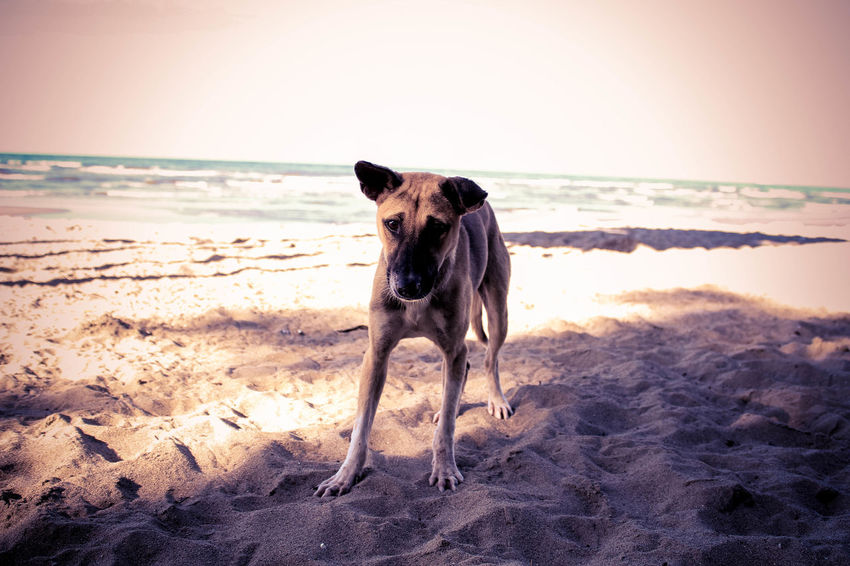 Animal Animal Themes Dog Dog On The Beach Dog Photography Dogs EyeEm Best Shots Eyeem Dog World OFFICIAL Photos Club 🐶🌍😄👍 One Animal Outdoors Pets Relaxation Funy Dogs Dog Are Fun Dogs On The Beach Dog Escape Dog Art