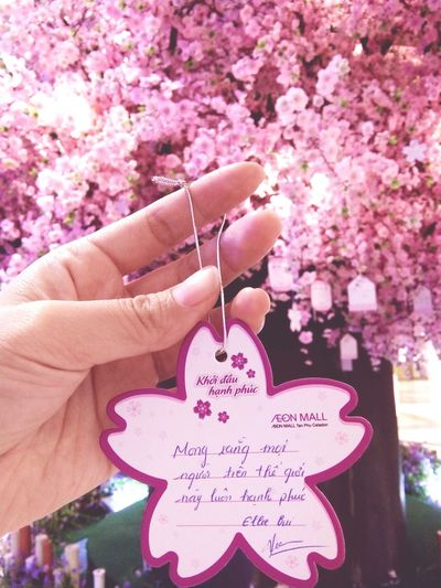 Pink Color Flower Tree People Only Women One Young Woman Only Day Outdoors