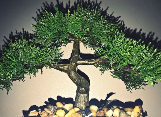 Vida 💞 Tree Nature No People Growth Branch Day Statue Indoors  Close-up Beauty In Nature Sky