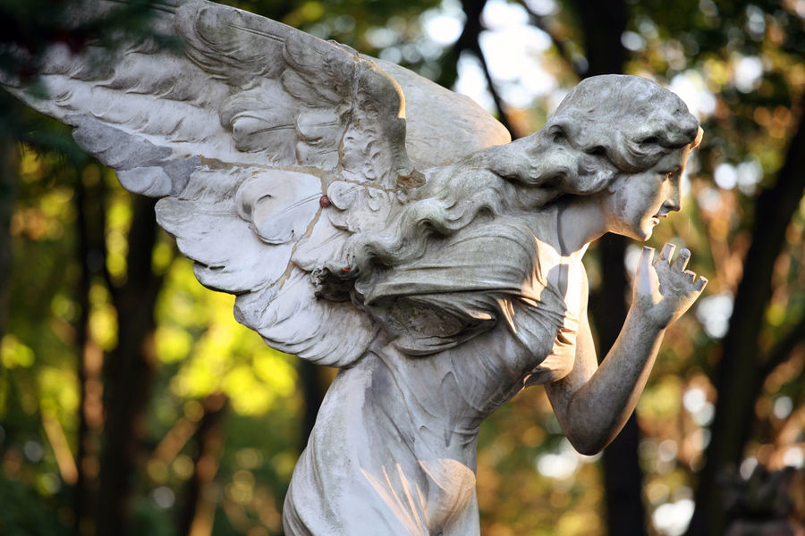 Powazkowki Cemetery, Warsaw, Poland Angel Autumn Cemetery Cmentarz Powązki Powązki Powązkowski Religion Sculpture Statue Statue Tombstone Varsowia Warsaw Warszawa  Wings