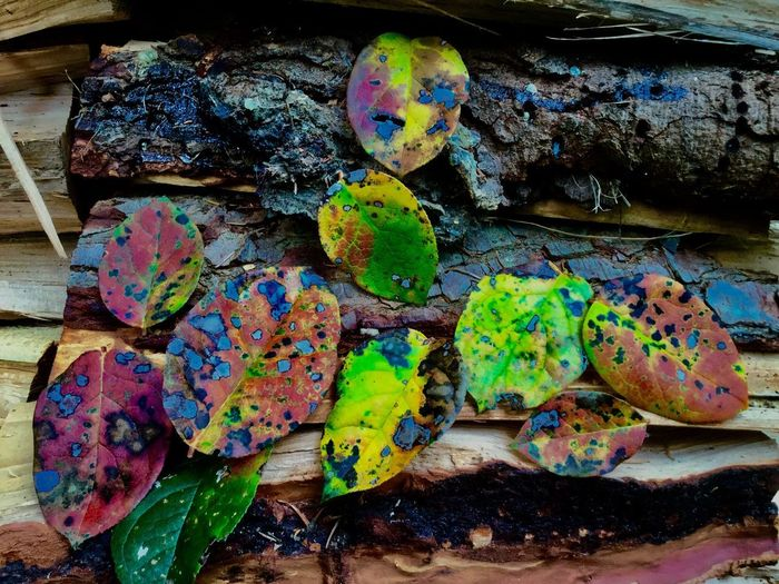 High angle view of multi colored candies on rock
