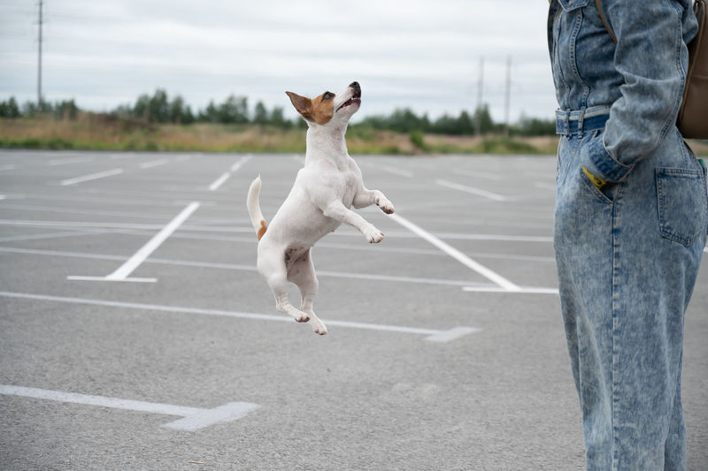 Dog standing on road