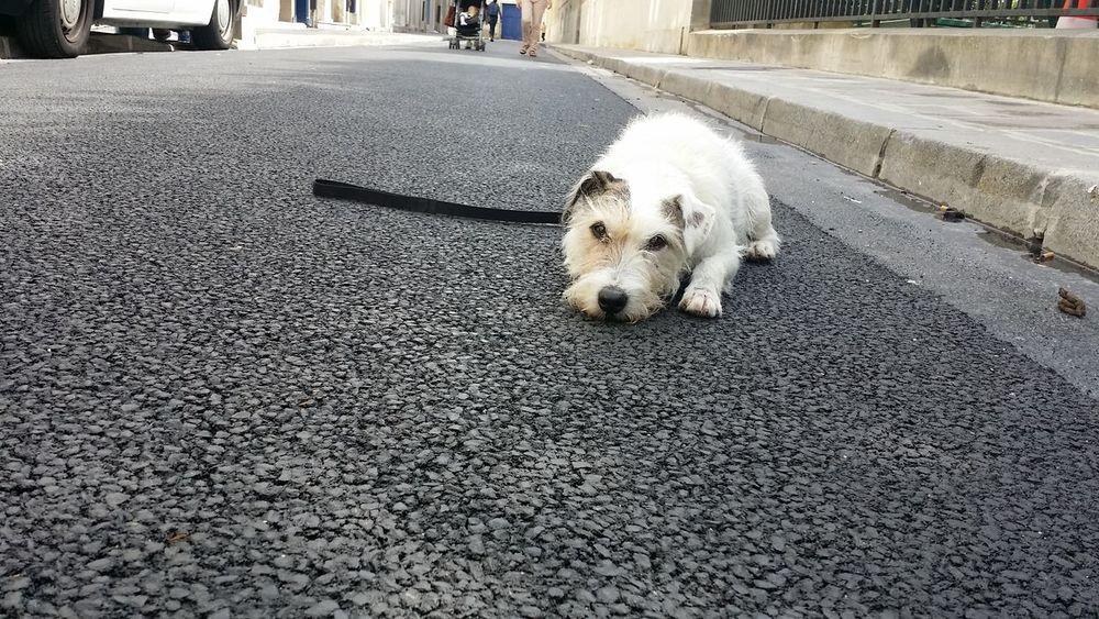 Dog Aww Belong Anywhere i heart London Seriousleecountingblessings
