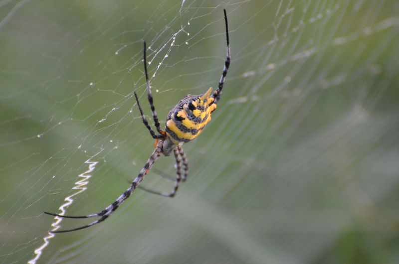 Africa Animal Themes Animals In The Wild Beginnings Bokeh Close-up Danger Focus On Foreground Insect Nature New Life No People One Animal RISK Selective Focus Southafrica Spider Spider Spider Web Spiderweb Spinning Web Wildlife Yellow Stripe Spider Zoology