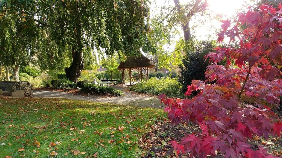 Familistere Jean-Baptiste André Godin Utopia Autumn Beauty In Nature Branch Built Structure Change Day Flower Garden Grass Growth Landscape Leaf Nature No People Outdoors Palais Social Plant Scenics Sky Tranquil Scene Tranquility Tree