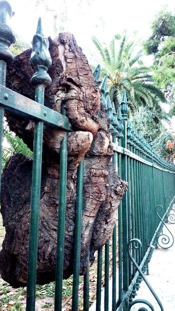 Athens Athens, Greece Green Fence Metallic Eaten by alien Tree Nature Violated Cruelty Streetphotography Urbanexploration Urban Nature Discover Your City
