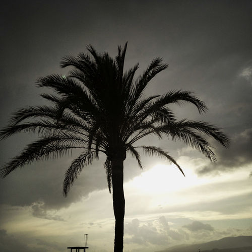 A palm tree in front of rainy clouds. Beauty In Nature Cloud - Sky Nature No People Outdoors Palm Tree Silhouette Sky Tranquility Tree