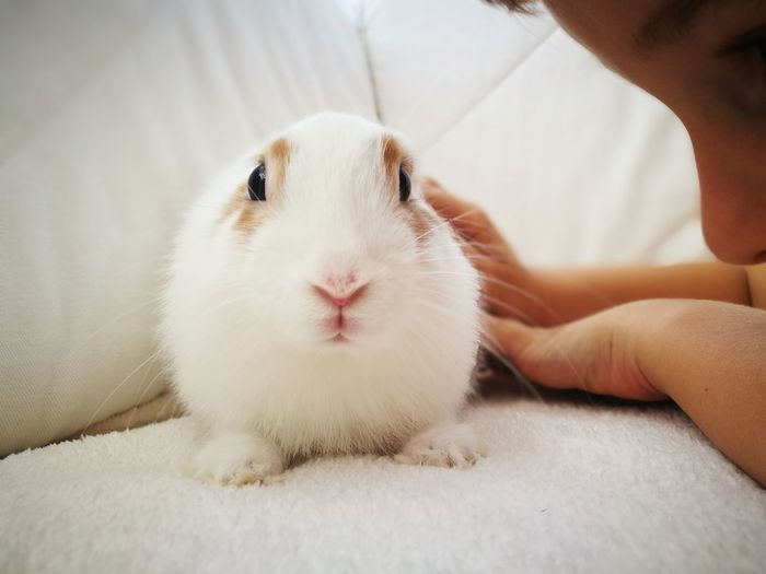 EyeEm Selects Pets One Animal Indoors  Animal Hair Domestic Animals People Human Body Part One Person Human Hand Mammal Hamster Close-up Day Boy One Boy One Boy Only One Boy Playing Pet Portraits Bunny  Rabbit White Animal EyeEm Animal Lover Animal Themes Animal Lover