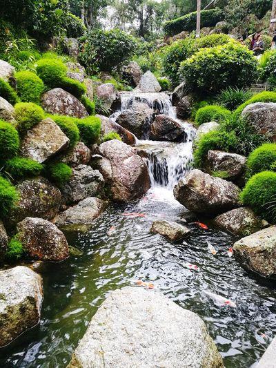 Japanese garden Waterfall Japanese Garden Bukit Tinggi Malaysia Nature Photography HuaweiP9 HuaweiP9Photography EyeEmNewHere