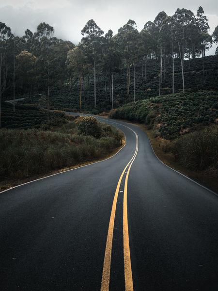 A lonesome road in a foggy scenery near Volcàn Turrialba in Costa Rica.