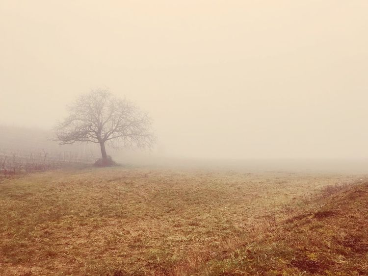 Foggy Wednesday Eyem Best Shots Wallpaper Minimalism Landscape Fog Landscape Tranquility Nature Tranquil Scene Beauty In Nature Cold Temperature Bare Tree No People Tree Scenics