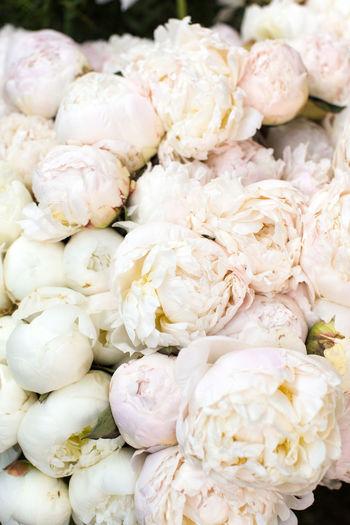 Full frame shot of white flowers for sale in market