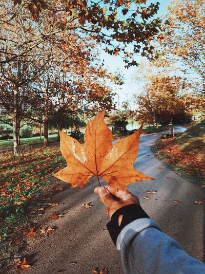 🍁 Park Autumn Change Nature Plant Tree Autumn Real People One Person Day Leaf Plant Part Sunlight Lifestyles Outdoors Leisure Activity Human Body Part Personal Perspective