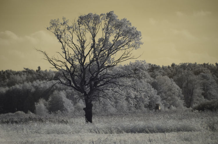 Autumn Infrared Nature Day Fields Landsape Monochrome Nature No People Outdoors Rustic Style Trip Photo