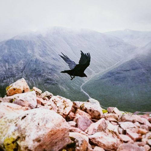 Black bird flying over mountains