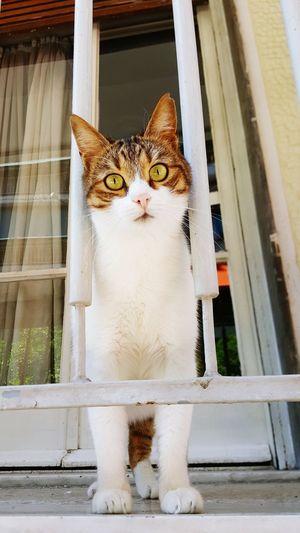 Portrait of cat on window sill