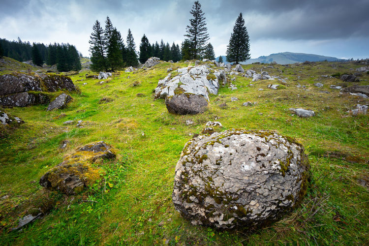 Plant Grass Rock Solid Beauty In Nature Tranquility Rock - Object Field Nature Environment Land Tranquil Scene No People Sky Scenics - Nature Landscape Green Color Cloud - Sky Day Non-urban Scene Outdoors