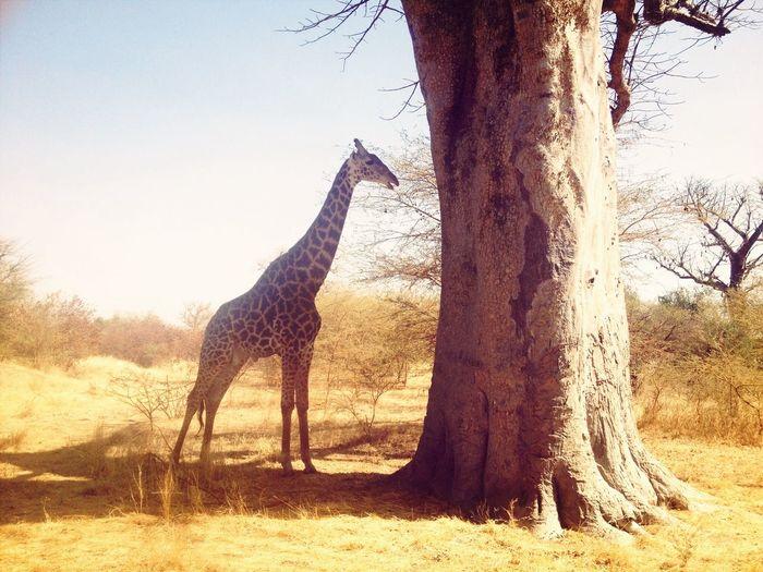 Animals africa Nature