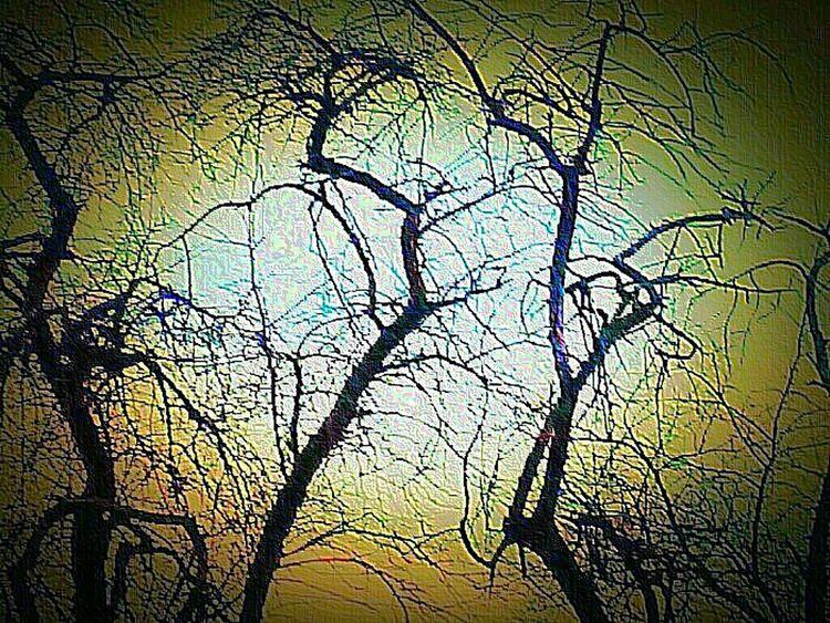Trees TreePorn Superphotoapp Emboss