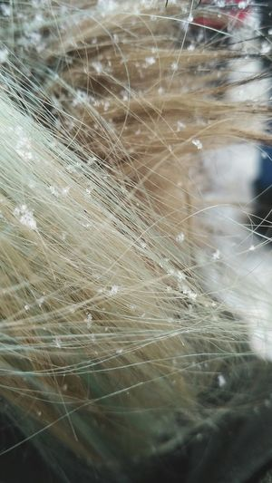 Beauty Beauty In Nature Hair Snow Snow ❄ Snowing Snowflake Haircolor Green Backgrounds Full Frame Web Close-up My Best Photo
