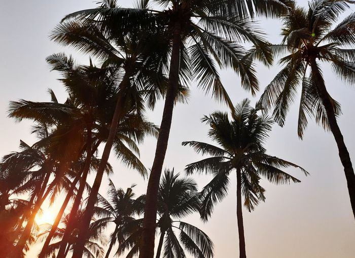Tree Tree Area Palm Tree Branch Tree Trunk Silhouette Sky Pine Woodland Tropical Tree Palm Leaf Coconut Palm Tree Coniferous Tree Pine Tree Frond Needle - Plant Part Leaf Vein Treetop Evergreen Tree Date Palm Tree Spruce Tree Rainforest Tree Canopy  Fir Tree Tropical Rainforest Tropical Climate Pinaceae Forest Fire Pine Cone Pine Wood