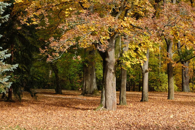 Tree Plant Autumn Change Plant Part Leaf Nature Growth Beauty In Nature Land Day No People Park Outdoors Tree Trunk Tranquility Landscape Field Tranquil Scene Trunk Treelined Autumn Collection Fall