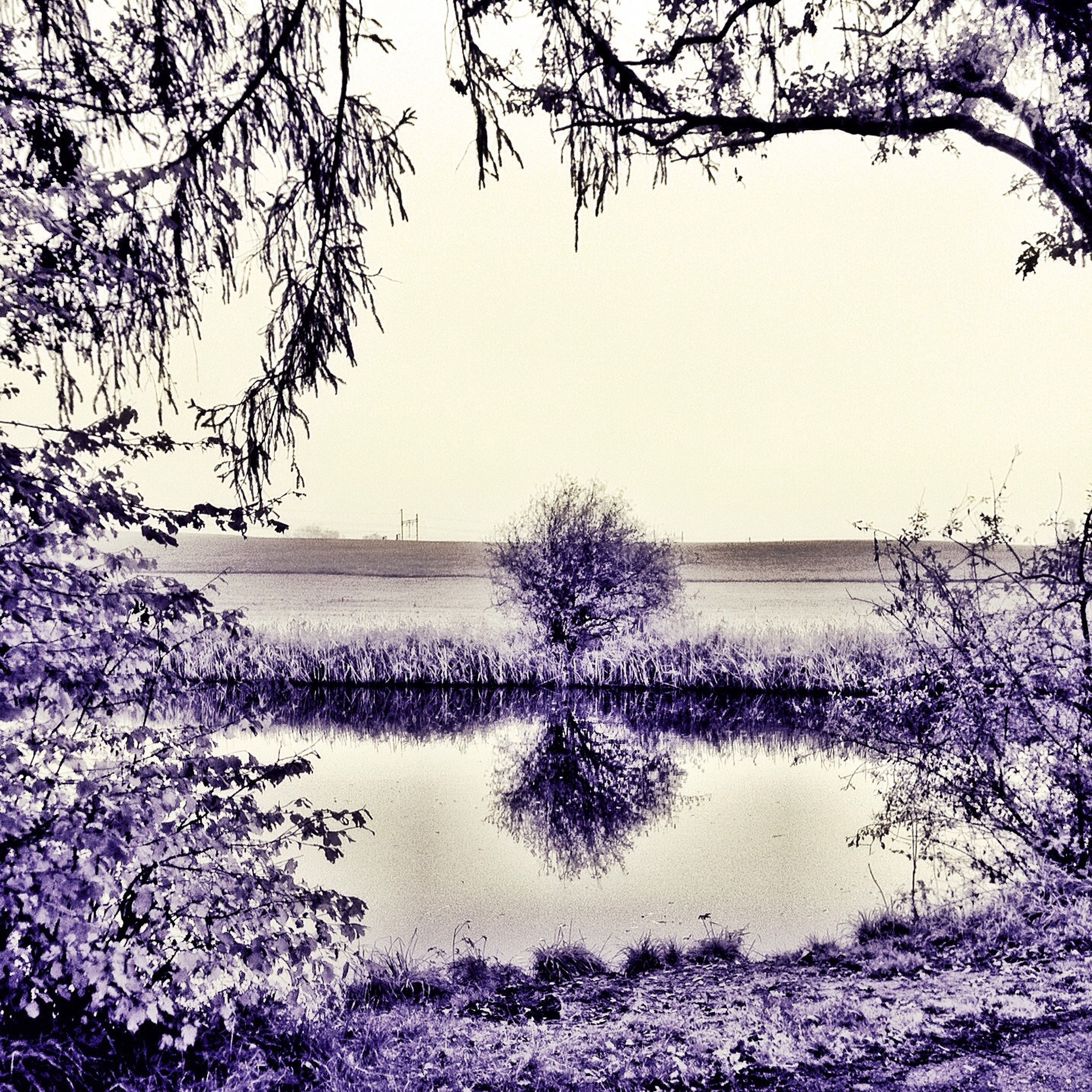water, clear sky, branch, tranquil scene, tranquility, beauty in nature, tree, nature, scenics, sea, bare tree, growth, lake, plant, horizon over water, copy space, idyllic, outdoors, flower, sky