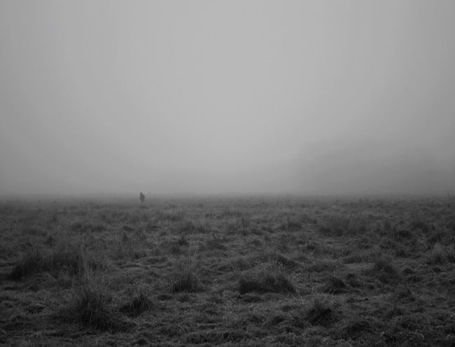 Misty winter morning in England Landscape Nature Field Scenics Rural Scene Grass Mist Fog Lone Figure Ghostly Winter Tranquility Grey Sky Outdoors Blackandwhite Walking
