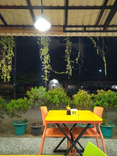 Seat Plant