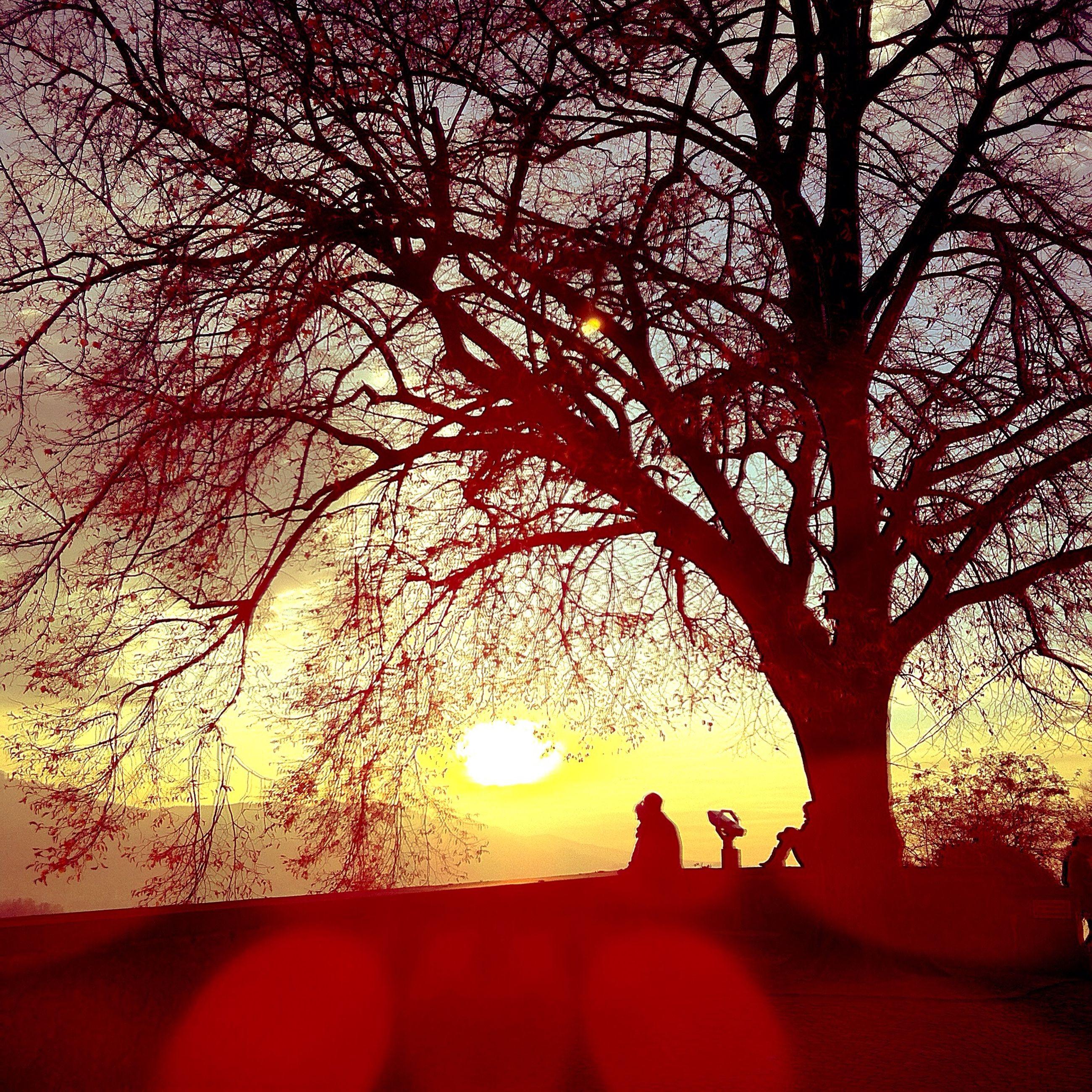 sunset, silhouette, tree, sun, branch, orange color, tranquility, tranquil scene, bare tree, beauty in nature, scenics, sunlight, nature, sky, idyllic, lens flare, sunbeam, landscape, back lit, outline