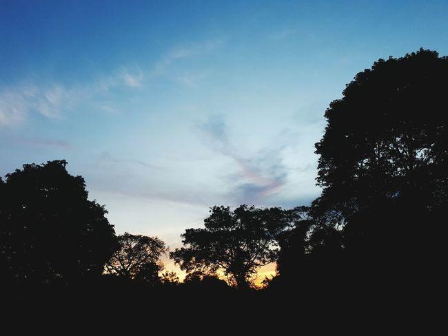 Silhouette Sky Tree Outdoors No People Cloud - Sky Nature