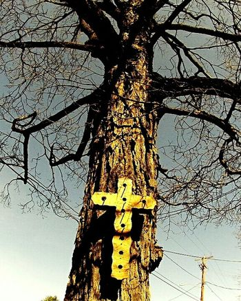 Check This Out Lookingup Spring Afternoon Cross Birdhouse Old Tree Religious Art Blue Sky Streetphotography Setting Sun