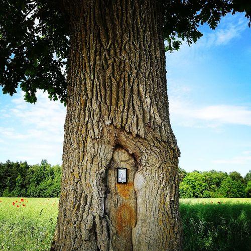 Altar Road-tree Tree Oak Religious  Tree
