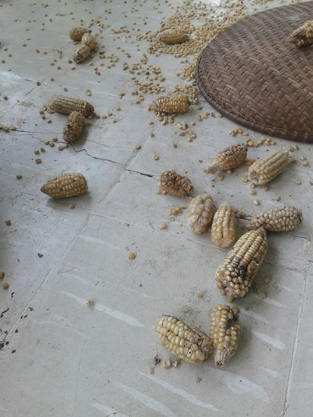 Corn Random Foodphotography Food Art High Angle View Food Styling Corn Harvest Cornfields Corncob Corn On The Cob