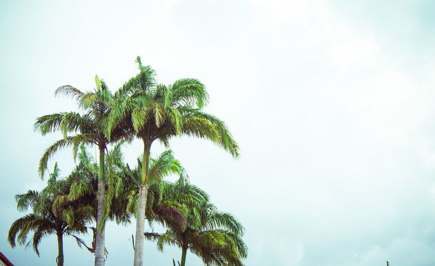 Beauty In Nature Day Green Color Growth Low Angle View Nature No People Outdoors Palm Tree Sky Tree