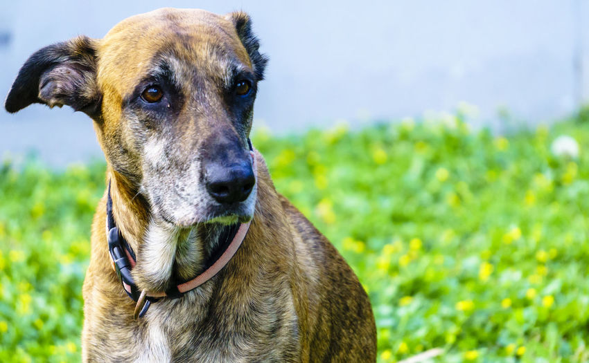 One Animal Animal Themes Canine Dog Domestic Animals Mammal Animal Domestic Pets Vertebrate Focus On Foreground No People Looking Day Animal Head  Pet Portraits Portrait Plant Grass Nature Field Close-up Outdoors