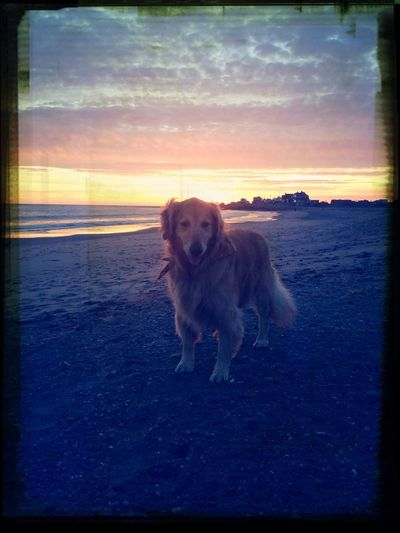 Being A Beach Bum Relaxing with My Dog in Rhode Island