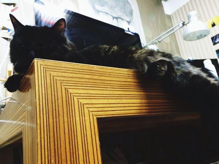 콩이 졸려? Cat 보광동