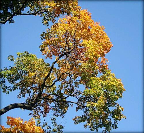 небо осень листья желтые Sky Autumn Colors Autumn Authentic Moments