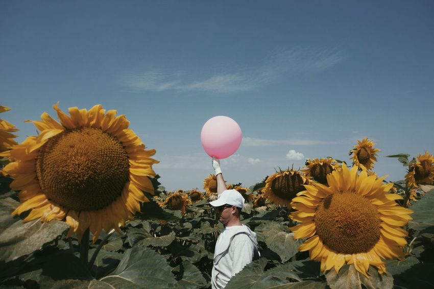 Pink Balloon Colors Colours Colorful Colourful Nature Sunflower Field One Person One Man Only People Flower Head Flower Balloon Sky Sunflower Blooming Growing In Bloom Plant Life Botany